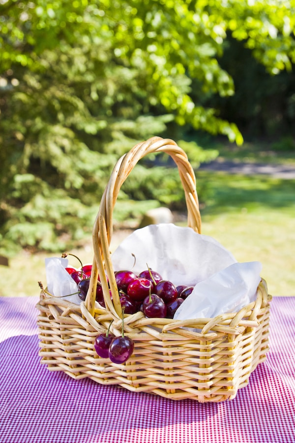 Basket of cherries on red and white checkered picnic blanket, surrounded by trees