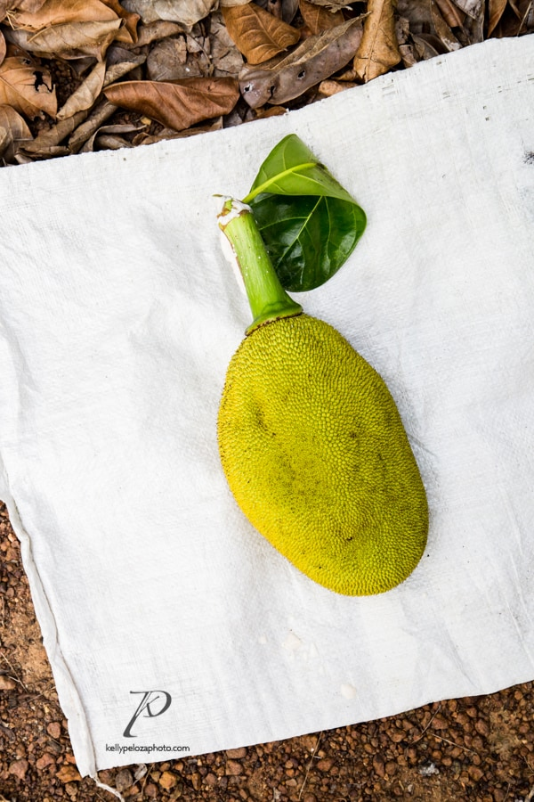 jackfruit-farm-images-1