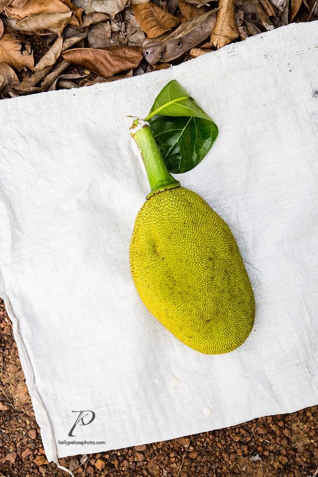 2016-thailand-jackfruit-farm-4-web