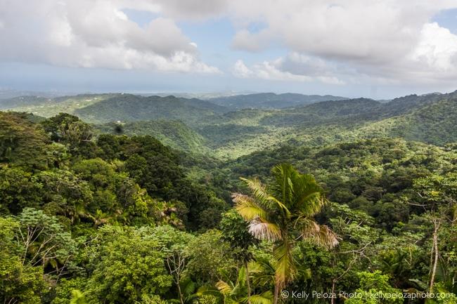 El Yunque National Forest, Puerto Rico | Kelly Peloza Photo